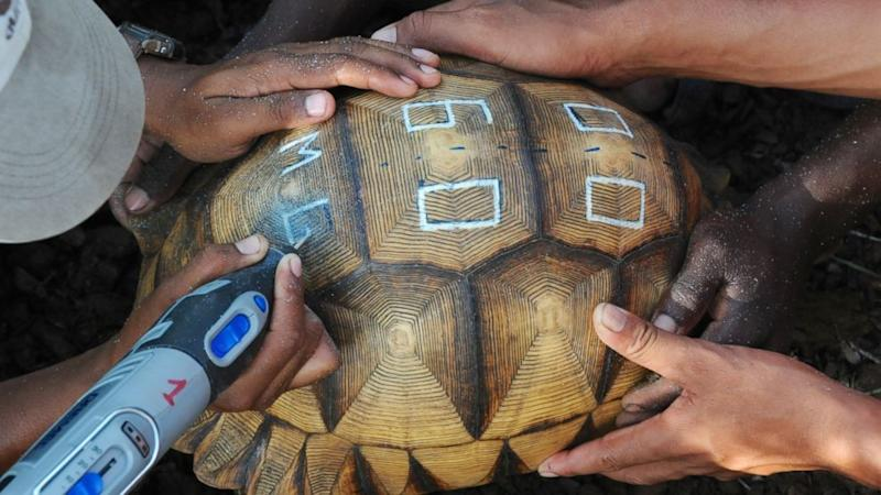 Find Out Why Endangered Tortoises Are Being Defaced