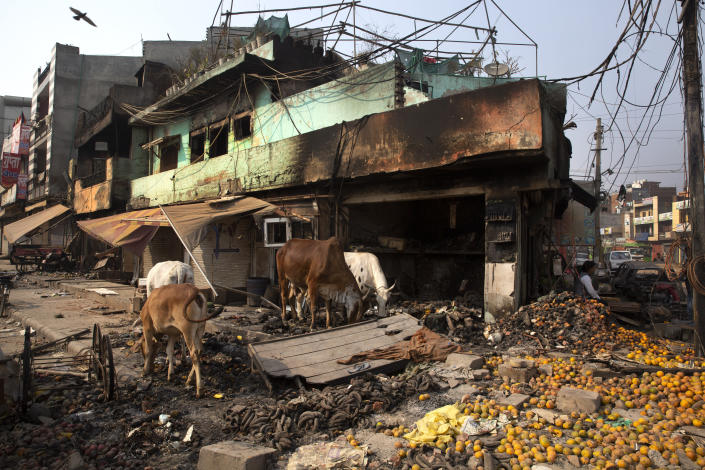 Stray cows feed on oranges lying outside a vandalized and burned shop following Tuesday's violence in New Delhi, India, Thursday, Feb. 27, 2020. India accused a U.S. government commission of politicizing communal violence in New Delhi that killed at least 30 people and injured more than 200 as President Donald Trump was visiting the country. The violent clashes between Hindu and Muslim mobs were the capital's worst communal riots in decades and saw shops, Muslim shrines and public vehicles go up in flames. (AP Photo/Rajesh Kumar Singh)