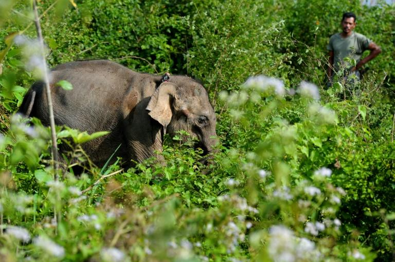 A baby elephant found last week next to a dead elephant without its tusk is being nursed back to health in an Indonesian conservation centre