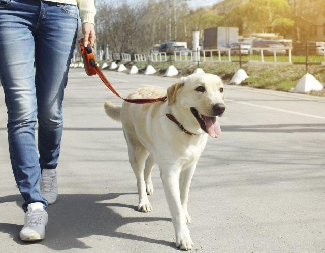 Successful guide dogs have 'tough love' moms, study finds