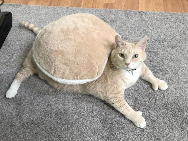 <p>This feline could be mistaken for a real-life Garfield — he weighs a staggering 33 pounds. (Photo: Caters News) </p>