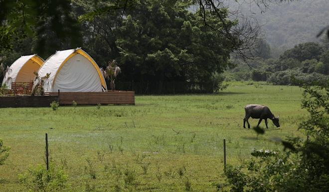 Some tents by Bull Wave Camp Plus on Lantau Island. Photo: Xiaomei Chen