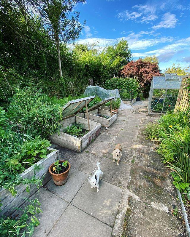 """<p>The fifth trend to have on your radar for next year is raised garden beds. While they're nothing new in the exciting world of horticulture, the straightforward design has certainly picked up momentum in recent months. </p><p>'By building a raised wooded garden bed, not only do you create a fantastic feature in your outside space, it's an ideal option if you don't have a lot of room in your garden. </p><p>'You can also gain better control over the <a href=""""https://www.housebeautiful.com/uk/garden/a32084485/garden-soil/"""" rel=""""nofollow noopener"""" target=""""_blank"""" data-ylk=""""slk:soil"""" class=""""link rapid-noclick-resp"""">soil</a>, reduce soil compaction and care for your plants much easier. The choice of wood is up to you – for a real rustic look, old railway sleepers work well,' the team explain.</p><p><a href=""""https://www.instagram.com/p/CC9Jf1ogy90/"""" rel=""""nofollow noopener"""" target=""""_blank"""" data-ylk=""""slk:See the original post on Instagram"""" class=""""link rapid-noclick-resp"""">See the original post on Instagram</a></p>"""