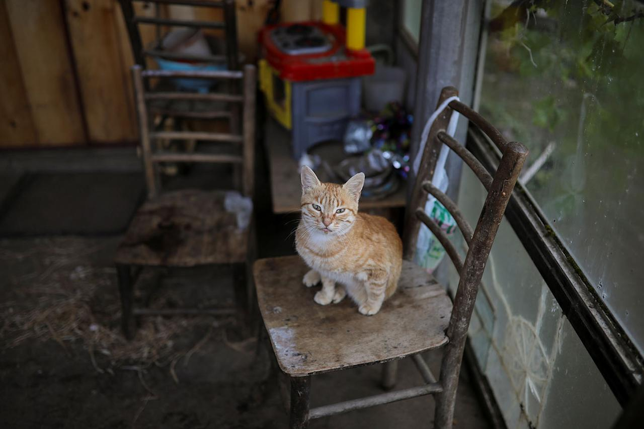 <p>A cat belonging to, Vida, a local who is the last woman living in the village, is seen in the village of Ravno Bucje, near the southeastern town of Knjazevac, Serbia, Aug. 14, 2017. (Photo: Marko Djurica/Reuters) </p>