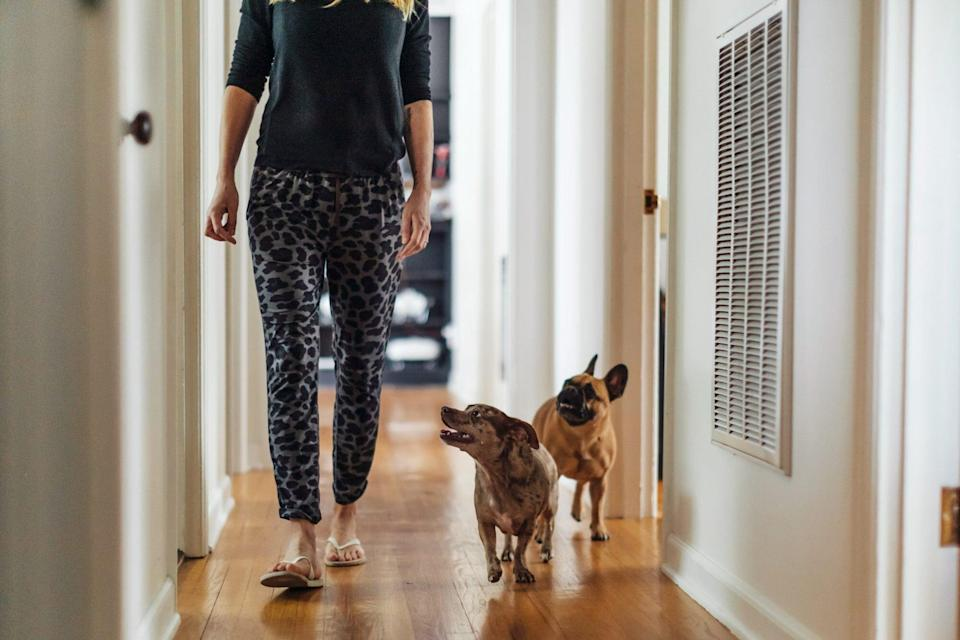 dogs following owner around home