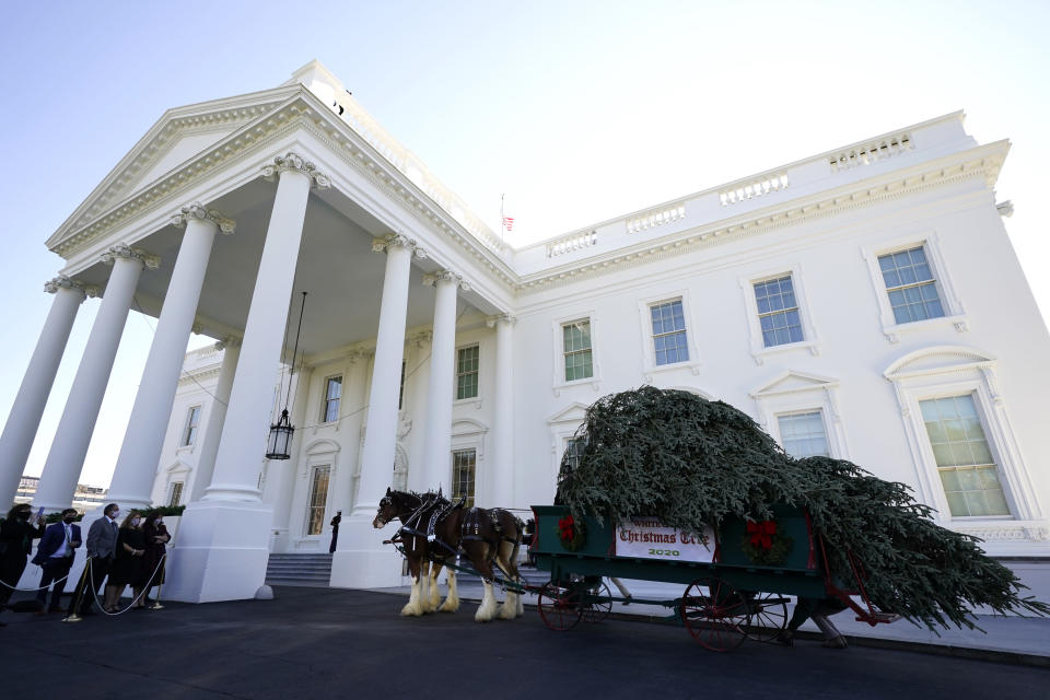The 2020 Official White House Christmas tree is presented on the North Portico of the White House, Monday, Nov. 23, 2020, in Washington. (AP Photo/Andrew Harnik)