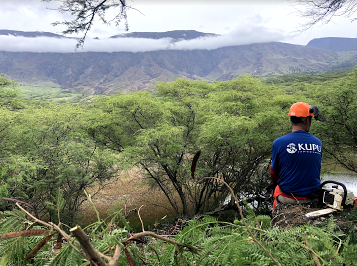 President Biden's climate action plan includes building out a civilian conservation corps. Programs are already established across the US like Kupu in Hawaii (Kupu/Dexter Hostetter)