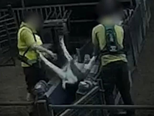 Goats abused at Far Marsh Farm in East Yorkshire: Surge / Screengrab