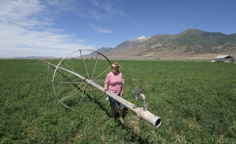 In this Wednesday, June 26, 2019, photo, Diane Jones looks at her alfalfa field, in Nephi, Utah. Next month, the wide metal barn on the Utah alfalfa farm owned by Russell and Diane Jones will host their youngest son's wedding; but by September, they hope the structure will be full of marijuana plants. The Joneses are fourth-generation farmers, members of The Church of Jesus Christ of Latter-day Saints, and among 81 applicants vying for one of a handful of coveted spots as state-licensed medical growers in conservative Utah. (AP Photo/Rick Bowmer)