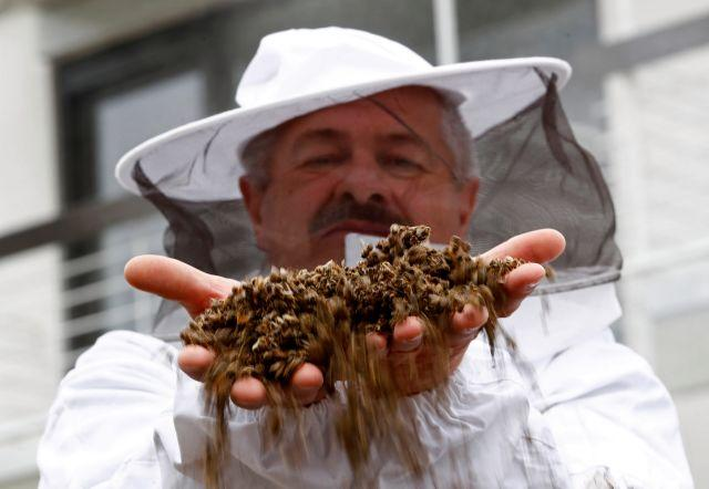 A beekeeper holds dead bees from a colony collapse incident at a protest against the merger of Germany's pharmaceutical and chemical maker Bayer AG with Monsanto.