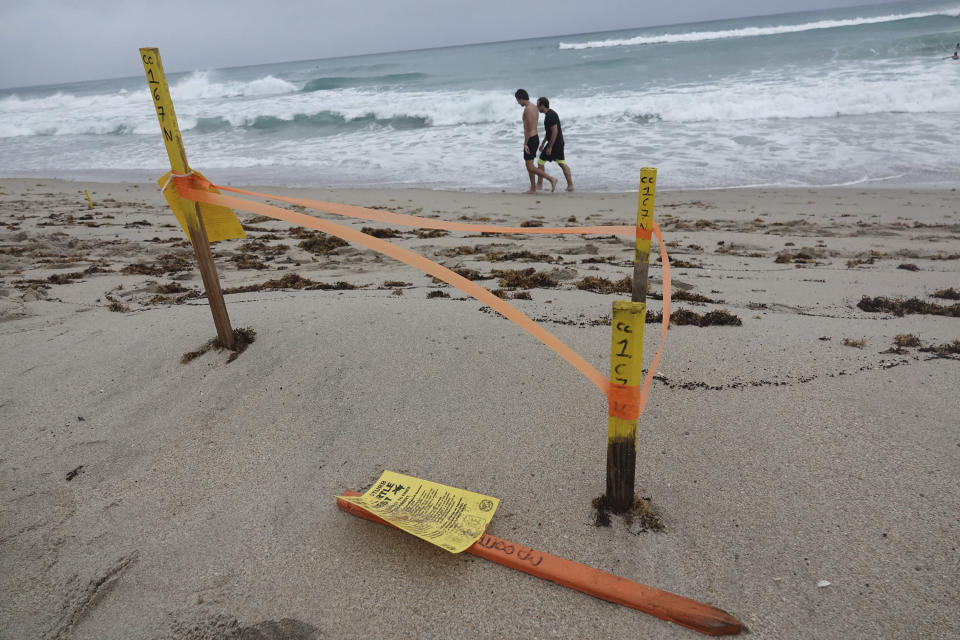 A turtle nest which was washed away in Delray Beach is seen, Sunday, Aug. 2, 2020, as Tropical Storm Isaias brushes past the East Coast of Florida. (Joe Cavaretta/South Florida Sun-Sentinel via AP)