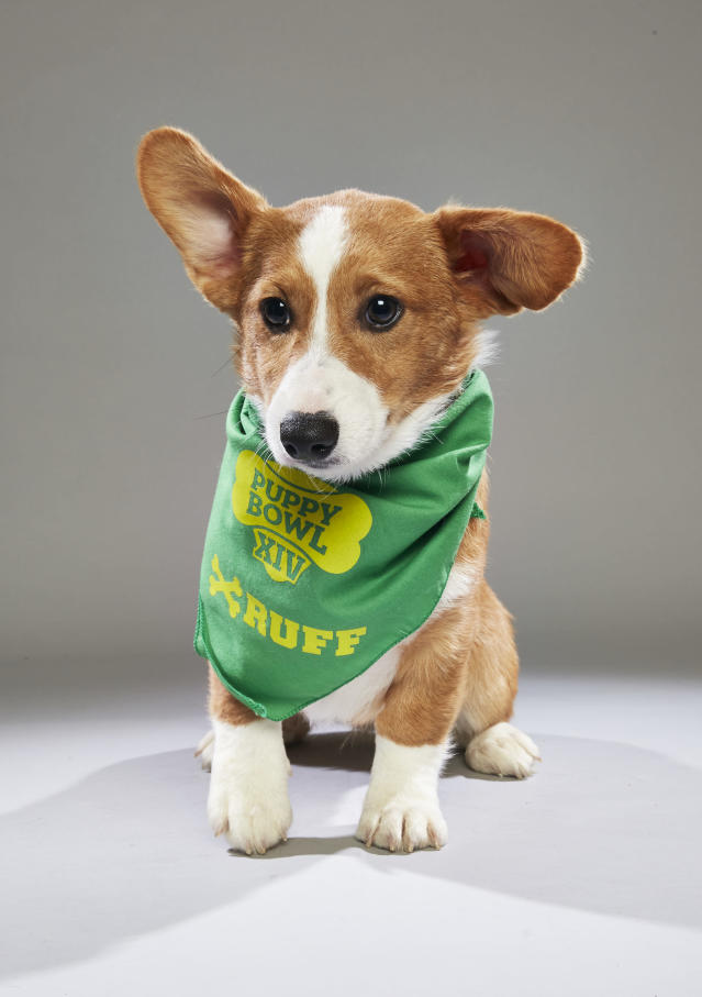 <p>Team: Ruff<br> From: Florida Little Dogs Rescue<br> (Photo: Animal Planet) </p>