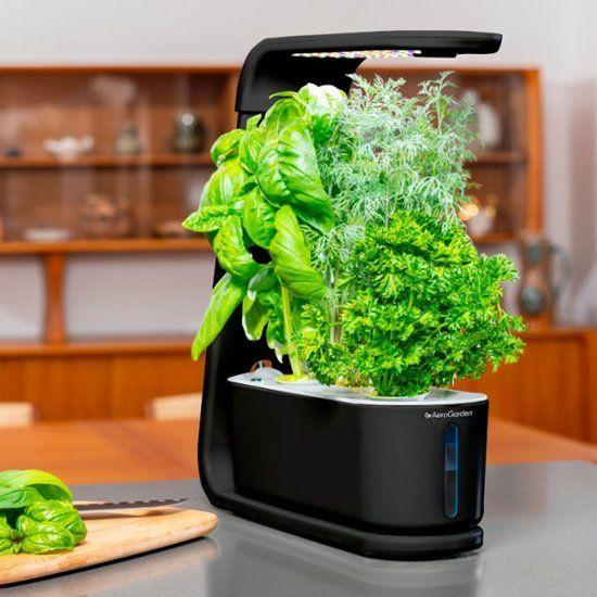 This is about as foolproof as gardening gets; I defy you to not grow a hearty batch of herbs! (Photo: AeroGarden)