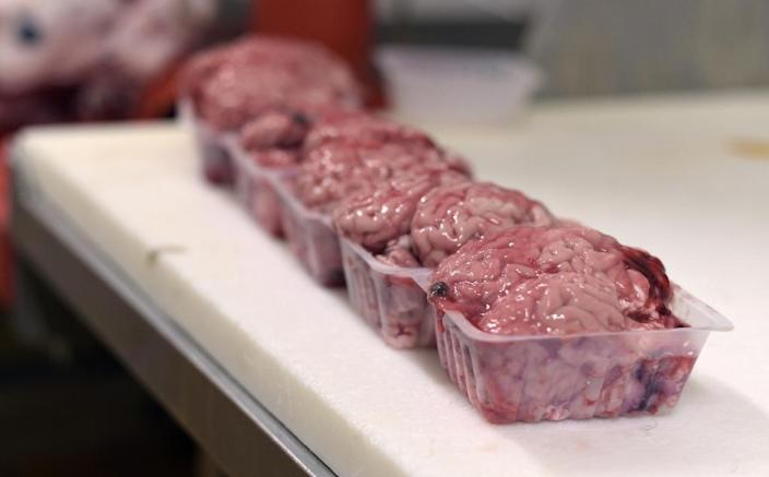 EU officials acknowledge that meat or milk derived from cows with a cloned ancestor may very well have made its way onto the market (AFP Photo/Adrien Morlent)