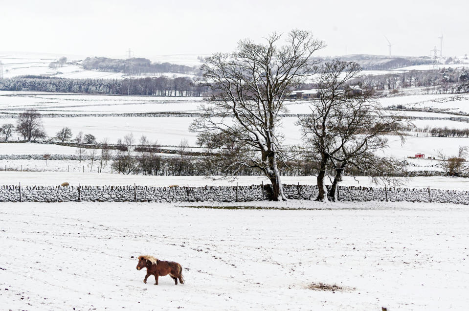 A pony walks in the snow near Millhouse Green in north east England, Sunday Feb. 7, 2021, with bitterly cold winds and heavy snow set to bring disruption to some parts of England. (Danny Lawson/PA via AP)