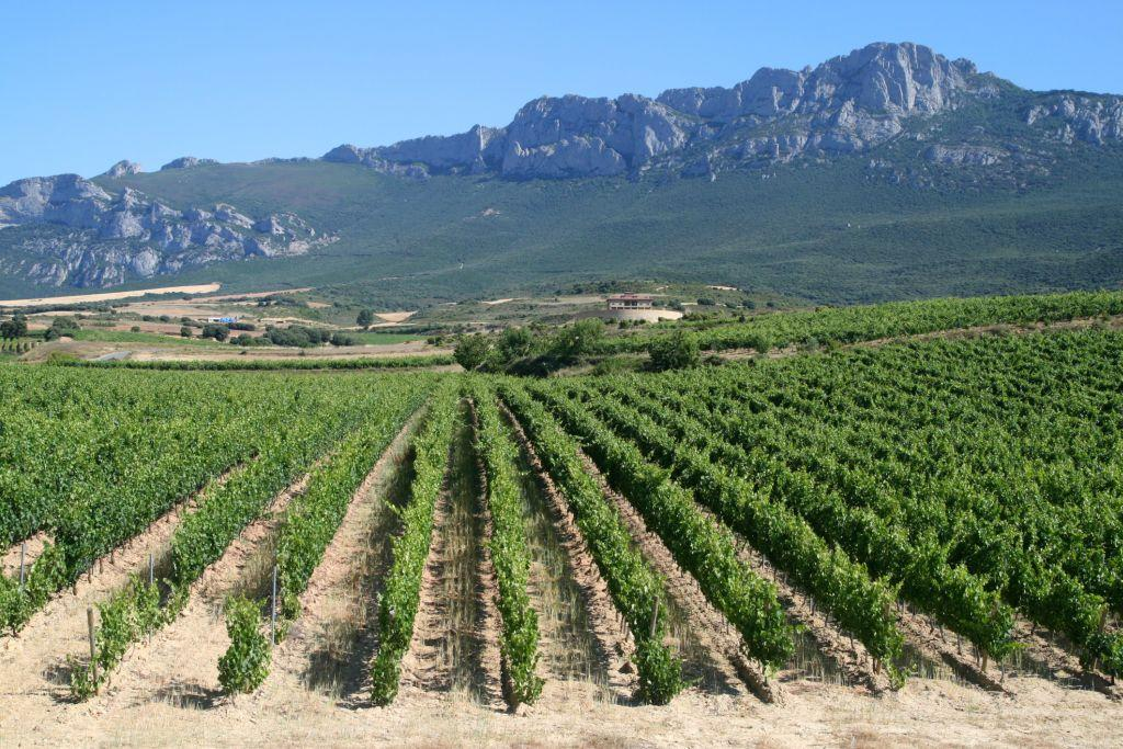 <b>LA RIOJA, SPAIN</b> <br>The region of La Rioja in Spain is known for a variety of wines that take the name Rioja. Interestingly, a winemaker in Rioja developed the first bottled version of the wine-based punch Sangria.