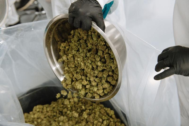 CannTrust Could Lose Its Pot License Amid a DeepeningSell-Off