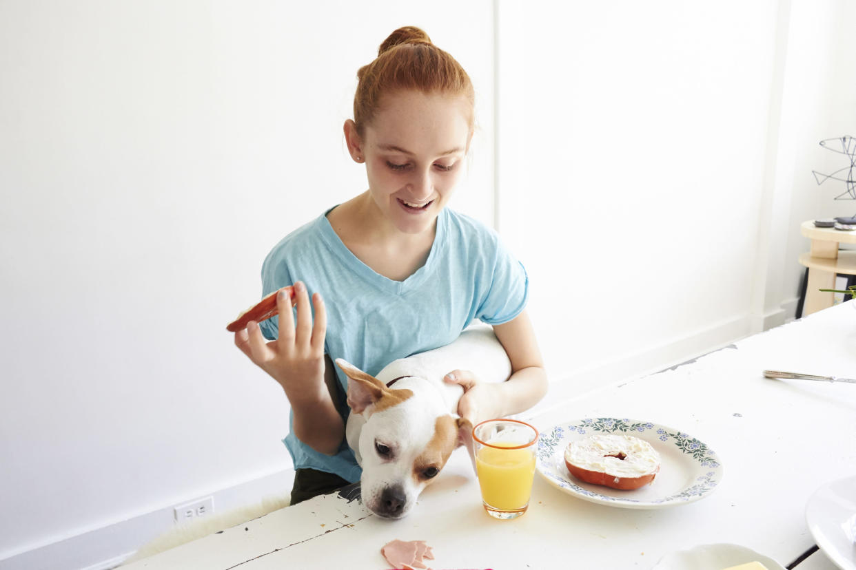 teenage girl with red hair pulled back in a bun wearing light blue shirt eating breakfast sitting at the dining room table morning orange juice in a glass on the table bagel with cream cheese small white dog sitting on the girls lap trying to eat something on the table both sitting on bench