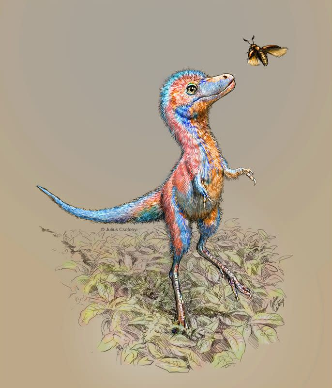 Baby tyrannosaur from the Cretaceous Period of North America is seen in an undated artist's rendition