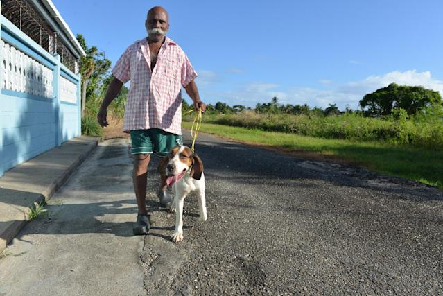 In this Dec. 31, 2013, 64-year-old hunter Francis Guelmo walks one of his hunting hounds on the outskirts of Chaguanas, Trinidad. The twin-island country of Trinidad and Tobago, at least on paper, has transformed the Caribbean nation into a no-trapping, no-hunting zone for about two years to give overexploited game animals some breathing room and to conduct wildlife surveys. Some 13,000 licensed hunters and their trained hounds are now forbidden to hunt on state lands. (AP Photo/David McFadden)