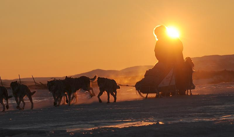 Iditarod musher Michelle Phillips, from Tagish, YT, Canada, arrives at the Unalakleet checkpoint at sunrise during the 2014 Iditarod Trail Sled Dog Race on Sunday, March 9, 2014. (AP Photo/The Anchorage Daily News, Bob Hallinen)