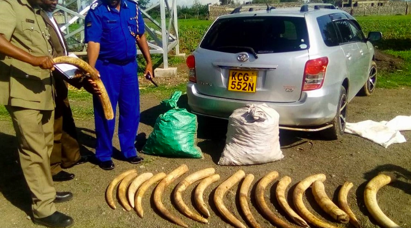 Kenya Wildlife Service seized these elephant tusks as part of the month long operation. (INTERPOL)