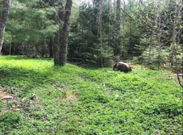 'We own two acres, and every year it takes up more and more of that surface area. Is there even any chance we can attempt to control this? Or should we just give up and let it happen?' asks Lauren McCaffrey, sharing a photo of her backyard in Beaver Bank, N.S.