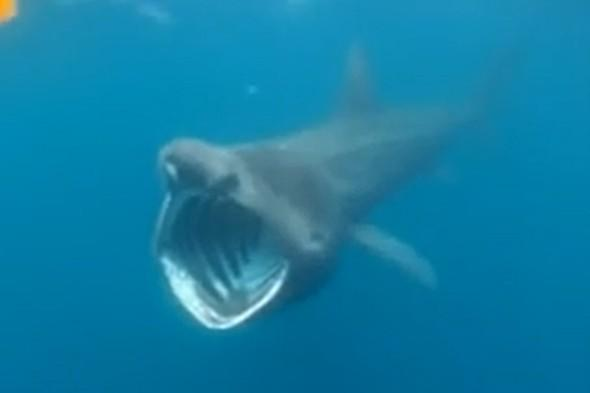 Kayaker's close encounter with basking shark in Ireland