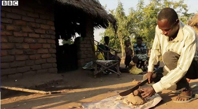 The people of the Nsanje district believe girls who refuse sex with a hyena like Aniva will suffer disease and even death to themselves and their families. Picture: BBC