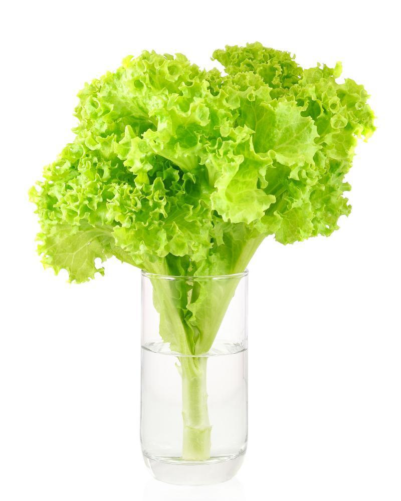Can lettuce water help you sleep?