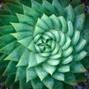 <p>Get mesmerized by the perfectly formed leaves of this aloe plant. </p>