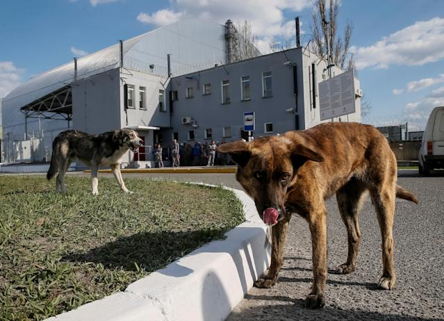 <p>Dogs are seen in front of a new Safe Confinement (NSC) structure over the old sarcophagus covering the damaged fourth reactor at the Chernobyl nuclear power plant, in Chernobyl, Ukraine, April 20, 2018. (Photo: Gleb Garanich/Reuters) </p>