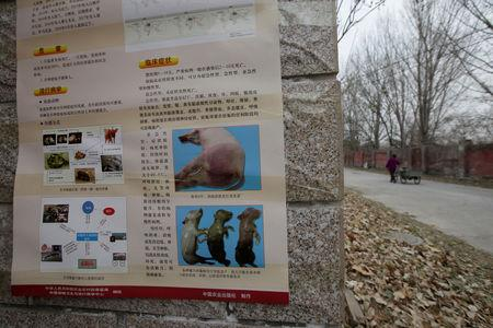FILE PHOTO: A poster on African swine fever is seen outside a farm after the outbreak of the disease in Fangshan district of Beijing, China November 23, 2018. REUTERS/Stringer
