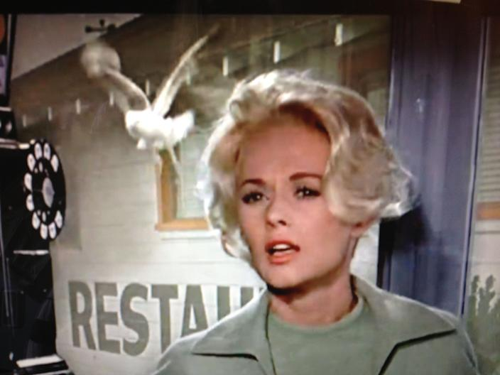 tippi hedren in phone booth the birds seagull