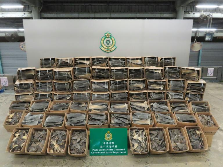A record 26 tonnes of shark fin were seized by customs officers in Hong Kong