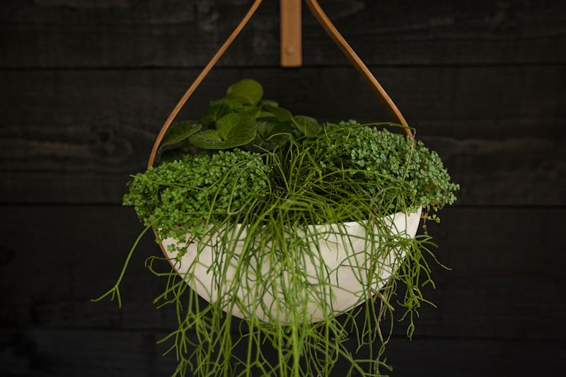Hanging planter made with steamed oak and earthenware by Tom Raffield, whose trade stand was planted by former Vogue art director, Sheila Jack.