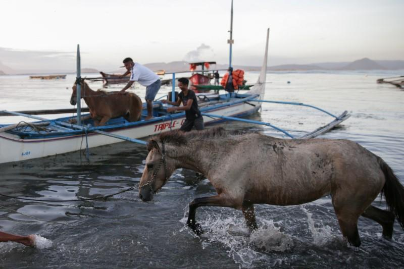 Residents bring back rescued horses from their homes near the errupting Taal Volcano