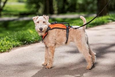 New PetSafe® Walk Along™ Outdoor Harness Makes Adventures with Furry Friends Easy