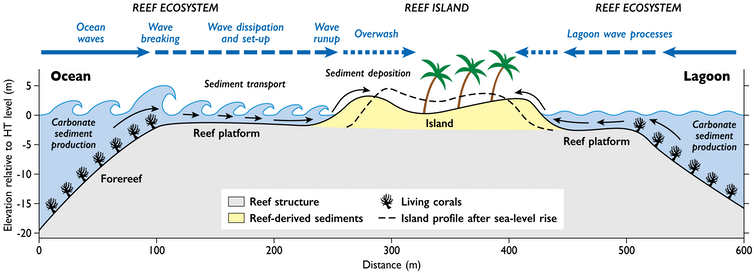 A diagram of a typical atoll island's structure