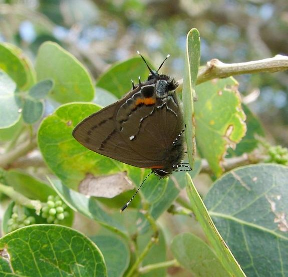 Butterflies Reveal Biodiversity at Guantanamo