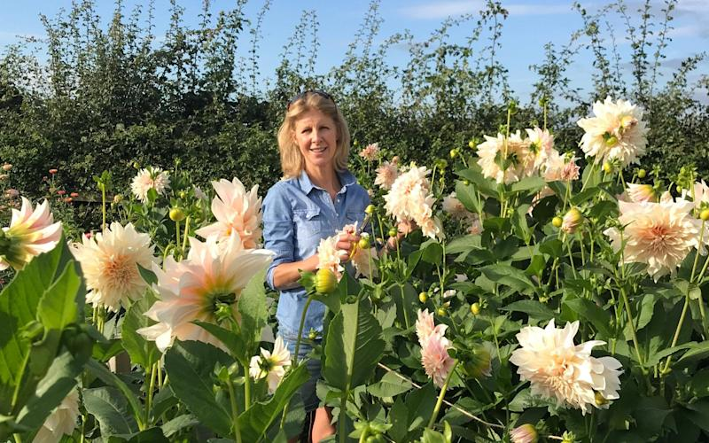 Philippa Stewart of JustDahlias on her flower farm in Cheshire  - JustDahlias