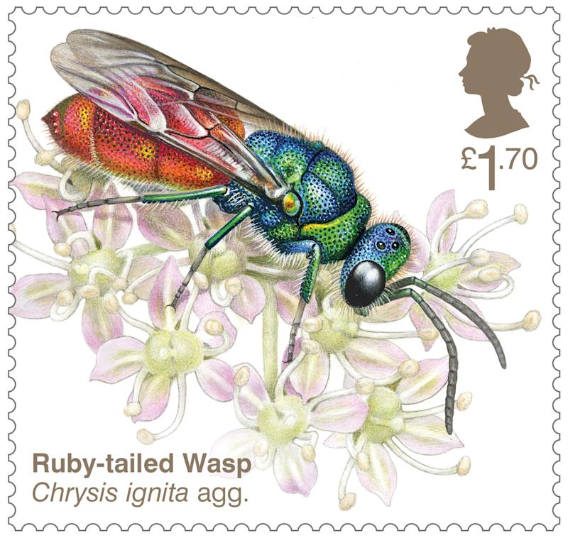 Ruby-tailed wasp stamp