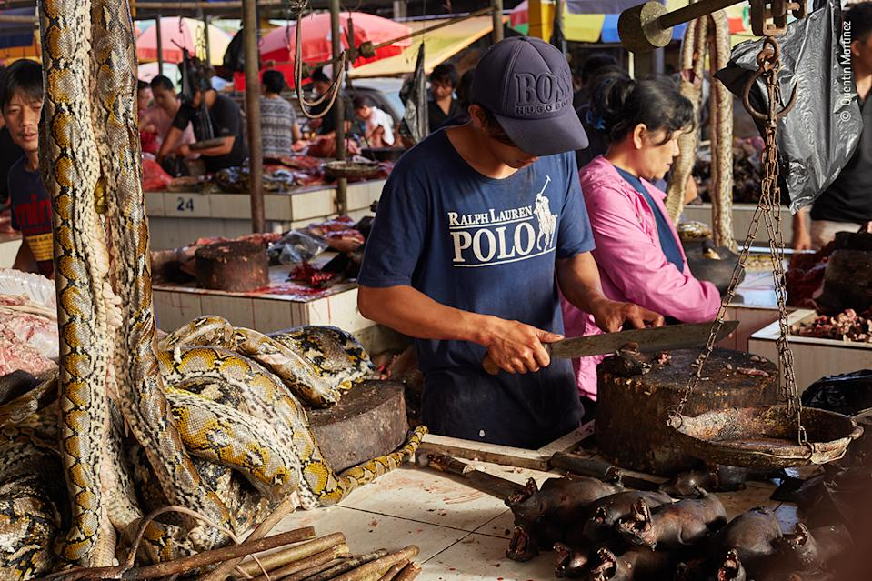 A market trader slicing up fruit bats is surrounded by his other wildlife wares: pythons to his right, with bamboo-skewered 'bush' rats beneath them.