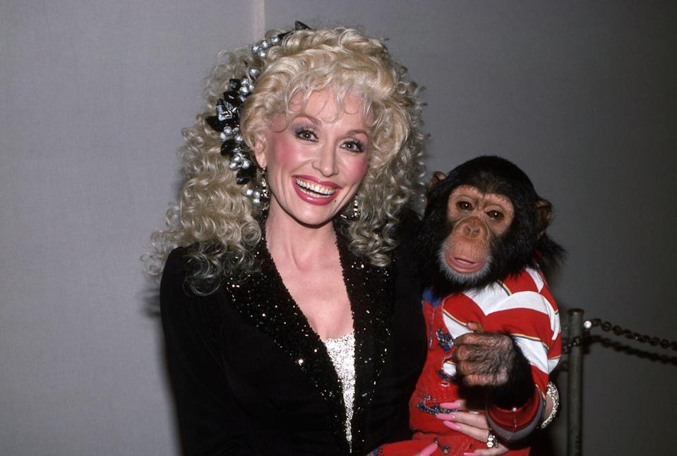 <p>Another guest from the animal kingdom, Dolly cuddles a sweet little Chimp for <em>Dolly!</em></p>