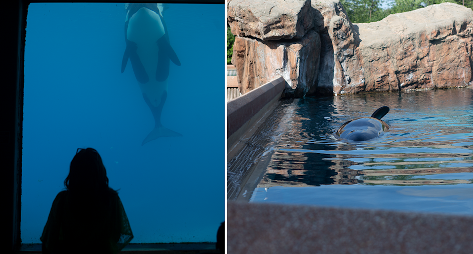 Split screen. Silhouette of a woman looking at Kiska through glass. Looking down on Kiska from above the water.