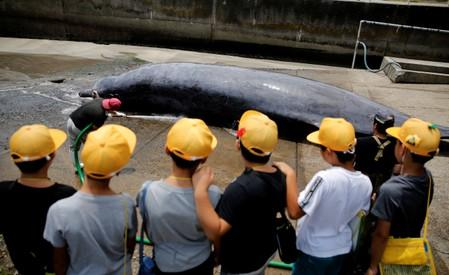 Children watch a Baird's Beaked whale being dragged up to be butchered at Wada port in Minamiboso