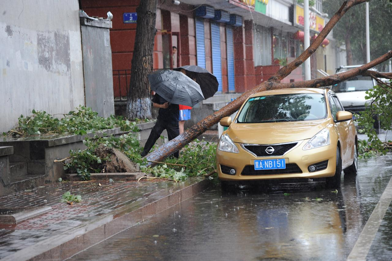 Trees are blown down by typhoon Bolaven on August 29, 2012 in Harbin, China. Typhoon Bolaven, the 15th typhoon to hit China this year, brought gales and rainstorms to east and northeast China on Tuesday and Wednesday.  (Photo by ChinaFotoPress/Getty Images)