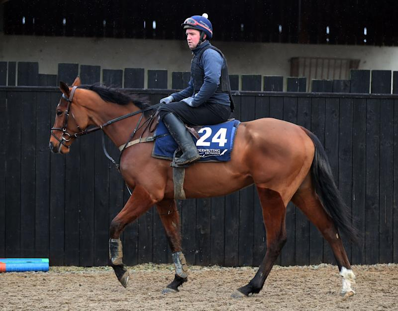 Mega Fortune at Gordon Elliott's stables in Longwood - Credit: Niall Carson/PA Wire