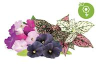 <p>The <span>Vibrant Flower 9-Pack of Plant Pods</span> ($24) is one of many seed options available on Click and Grow's website. It contains petunias, black pansies, and colorful polka-dot plants.</p>