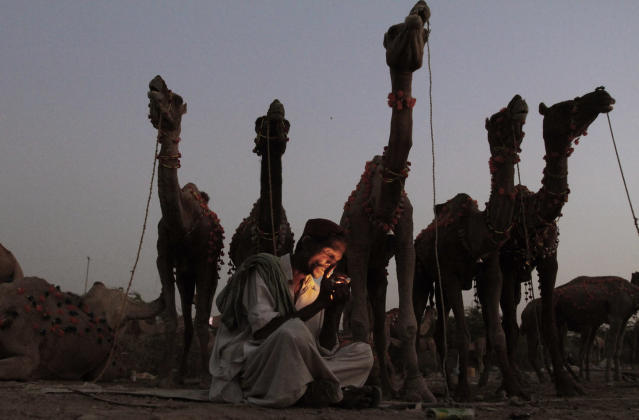 """<p>A Pakistani man, lights a cigarette while sitting next to his camels, displayed for sale for the upcoming Muslim holiday of Eid al-Adha, or """"Feast of Sacrifice"""", in Karachi, Pakistan, Oct. 24, 2012. (AP Photo/Shakil Adil) </p>"""